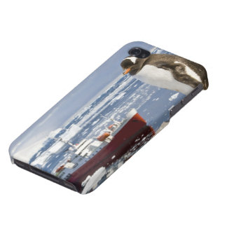 Antarctica, Neko Cove (Harbour). Gentoo penguin Cover For iPhone 4