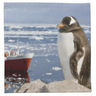 Antarctica, Neko Cove (Harbour). Gentoo penguin Napkin