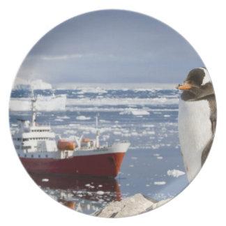 Antarctica, Neko Cove (Harbour). Gentoo penguin Plate