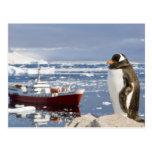 Antarctica, Neko Cove (Harbour). Gentoo penguin Postcards