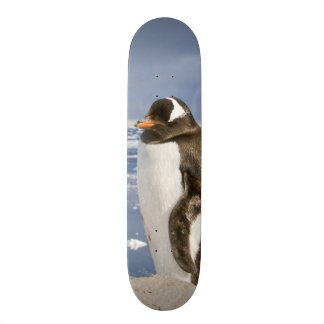 Antarctica, Neko Cove (Harbour). Gentoo penguin Skateboards