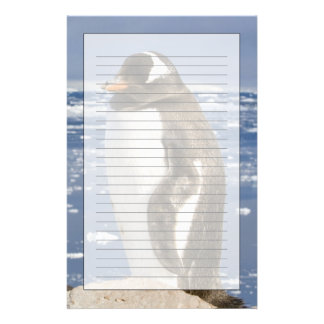 Antarctica, Neko Cove (Harbour). Gentoo penguin Stationery