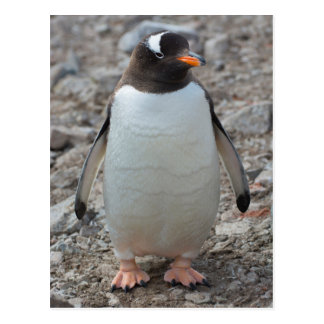 Antarctica. Neko Harbor. Gentoo Penguin 2 Postcard
