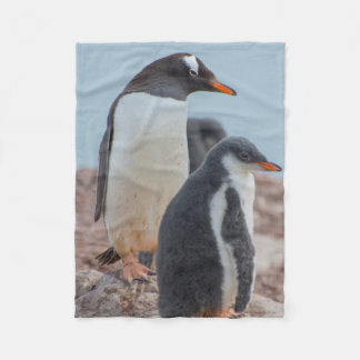 Antarctica. Neko Harbor. Gentoo Penguin 3 Fleece Blanket