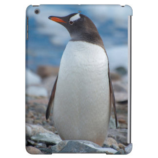 Antarctica. Neko Harbor. Gentoo Penguin iPad Air Cover