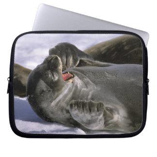 Antarctica, Nelson Island. Southern Furl seal Laptop Sleeve