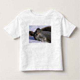 Antarctica, Nelson Island. Southern Furl seal T Shirts