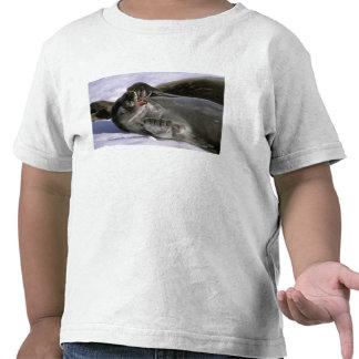 Antarctica, Nelson Island. Southern Furl seal Tee Shirts