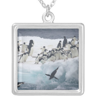 Antarctica, Paulet Island. Adelie penguins Silver Plated Necklace