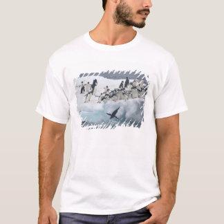 Antarctica, Paulet Island. Adelie penguins T-Shirt