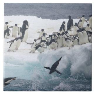 Antarctica, Paulet Island. Adelie penguins Tile