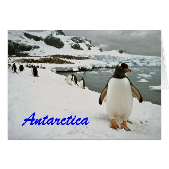 Antarctica Penguins Greetings Card