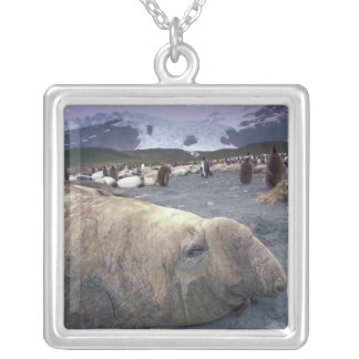 Antarctica, South Georgia Island, Elephant seal Silver Plated Necklace