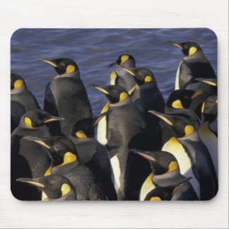 Antarctica, South Georgia Island. King penguins 2 Mouse Mat