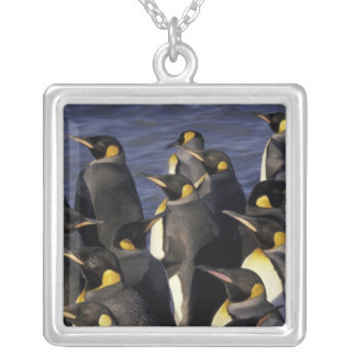 Antarctica, South Georgia Island. King penguins 2 Silver Plated Necklace