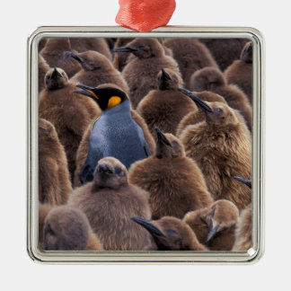 Antarctica, South Georgia Island, King penguins Christmas Ornament