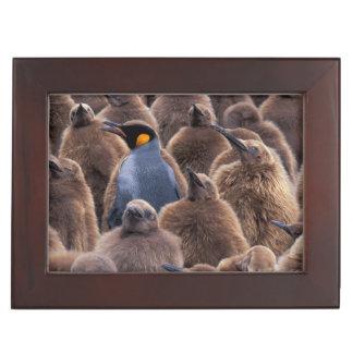 Antarctica, South Georgia Island, King penguins Keepsake Box