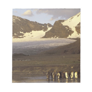 Antarctica, South Georgia Island. King penguins Notepad