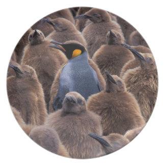 Antarctica, South Georgia Island, King penguins Plates