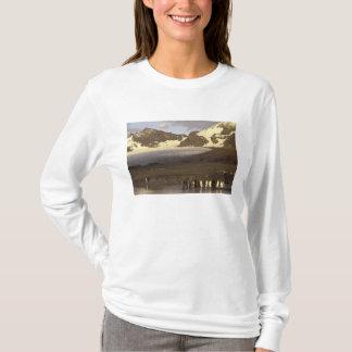 Antarctica, South Georgia Island. King penguins T-Shirt