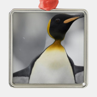 Antarctica, South Georgia Island UK), 4 Christmas Ornament