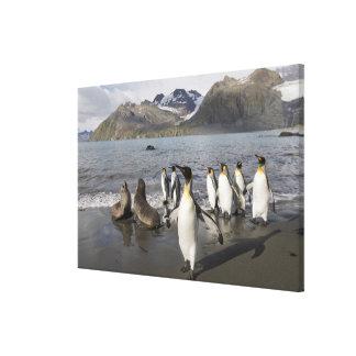 Antarctica, South Georgia Island (UK), Antarctic 2 Stretched Canvas Print