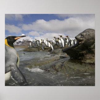 Antarctica, South Georgia Island (UK), Antarctic Poster