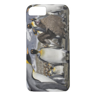Antarctica, South Georgia Island (UK), Brown iPhone 8/7 Case