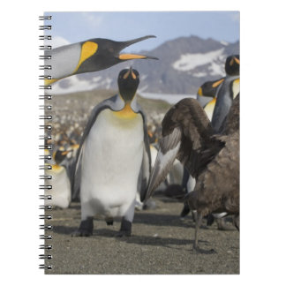 Antarctica, South Georgia Island (UK), Brown Notebook