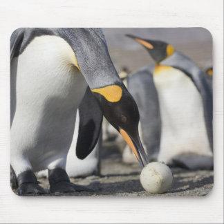 Antarctica, South Georgia Island (UK), King 10 Mouse Mat