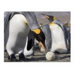Antarctica, South Georgia Island (UK), King 10 Postcard