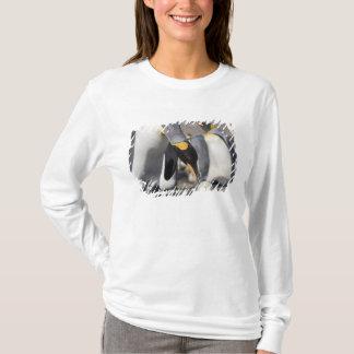 Antarctica, South Georgia Island (UK), King 10 T-Shirt
