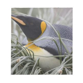 Antarctica, South Georgia Island (UK), King 11 Notepad