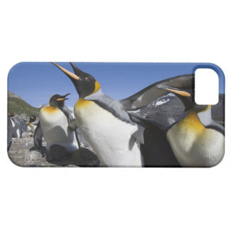Antarctica, South Georgia Island (UK), King 12 Barely There iPhone 5 Case