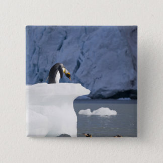 Antarctica, South Georgia Island (UK), King 13 15 Cm Square Badge