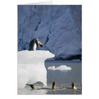 Antarctica, South Georgia Island (UK), King 13 Card