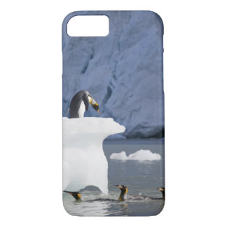 Antarctica, South Georgia Island (UK), King 13 iPhone 8/7 Case