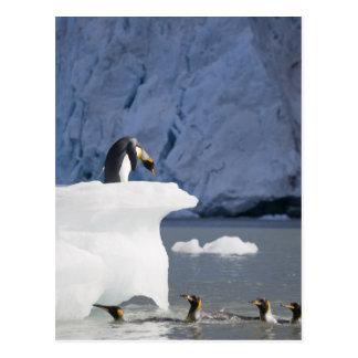 Antarctica, South Georgia Island (UK), King 13 Post Cards
