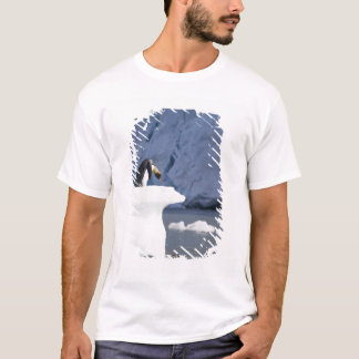 Antarctica, South Georgia Island (UK), King 13 T-Shirt