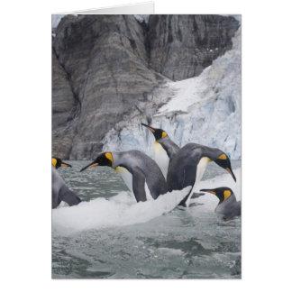 Antarctica, South Georgia Island (UK), King 14 Card