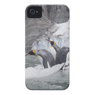 Antarctica, South Georgia Island (UK), King 14 iPhone 4 Case