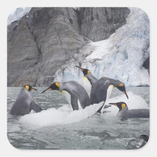 Antarctica, South Georgia Island (UK), King 14 Square Sticker