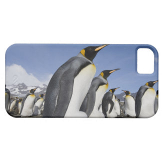 Antarctica, South Georgia Island (UK), King 2 Barely There iPhone 5 Case