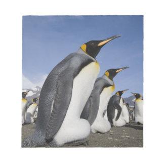 Antarctica, South Georgia Island (UK), King 2 Notepad