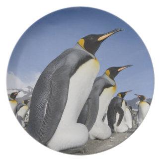 Antarctica, South Georgia Island (UK), King 2 Plate