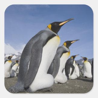 Antarctica, South Georgia Island (UK), King 2 Square Sticker