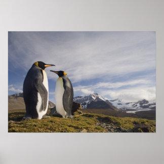 Antarctica, South Georgia Island UK), King 3 Poster