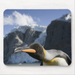 Antarctica, South Georgia Island UK), King 4