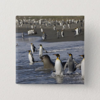 Antarctica, South Georgia Island (UK), King 4 15 Cm Square Badge