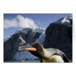 Antarctica, South Georgia Island UK), King 4 Greeting Card